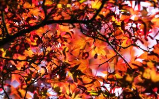 Golden-leaves-background